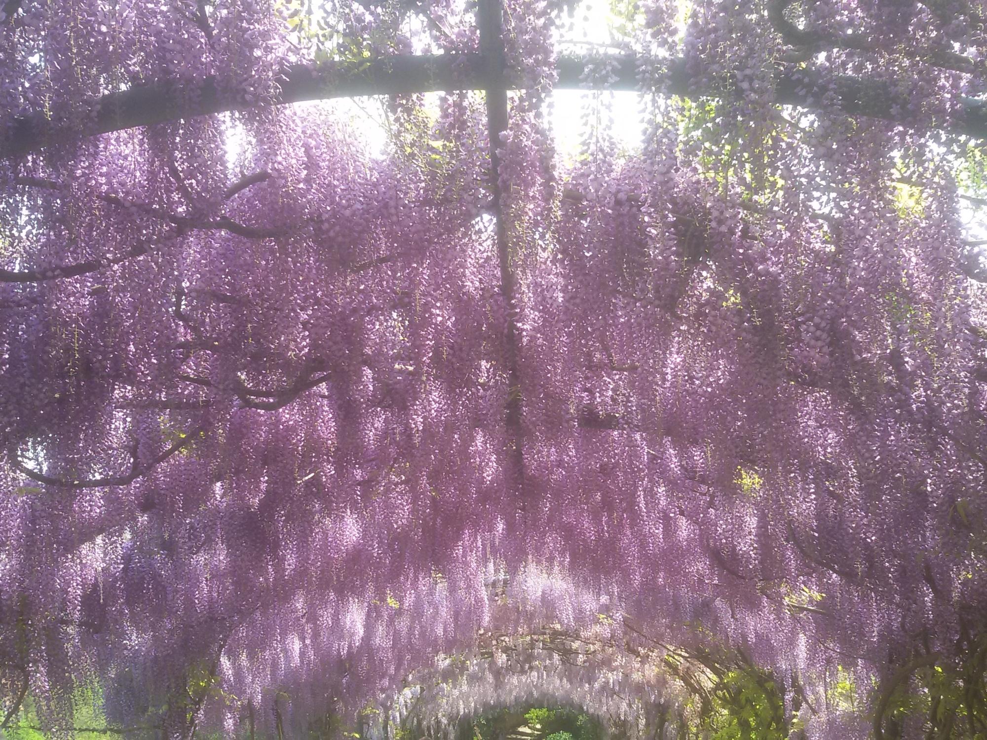 I giardini iris e rose incantati con il giardino di rachel - Arte e giardino ...